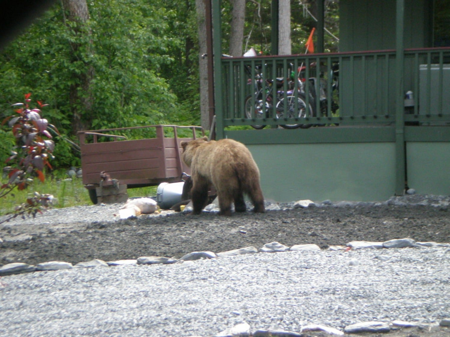 Bears and people: Neighbors on their best behavior? -The