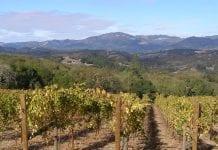 Sonoma Vineyard California