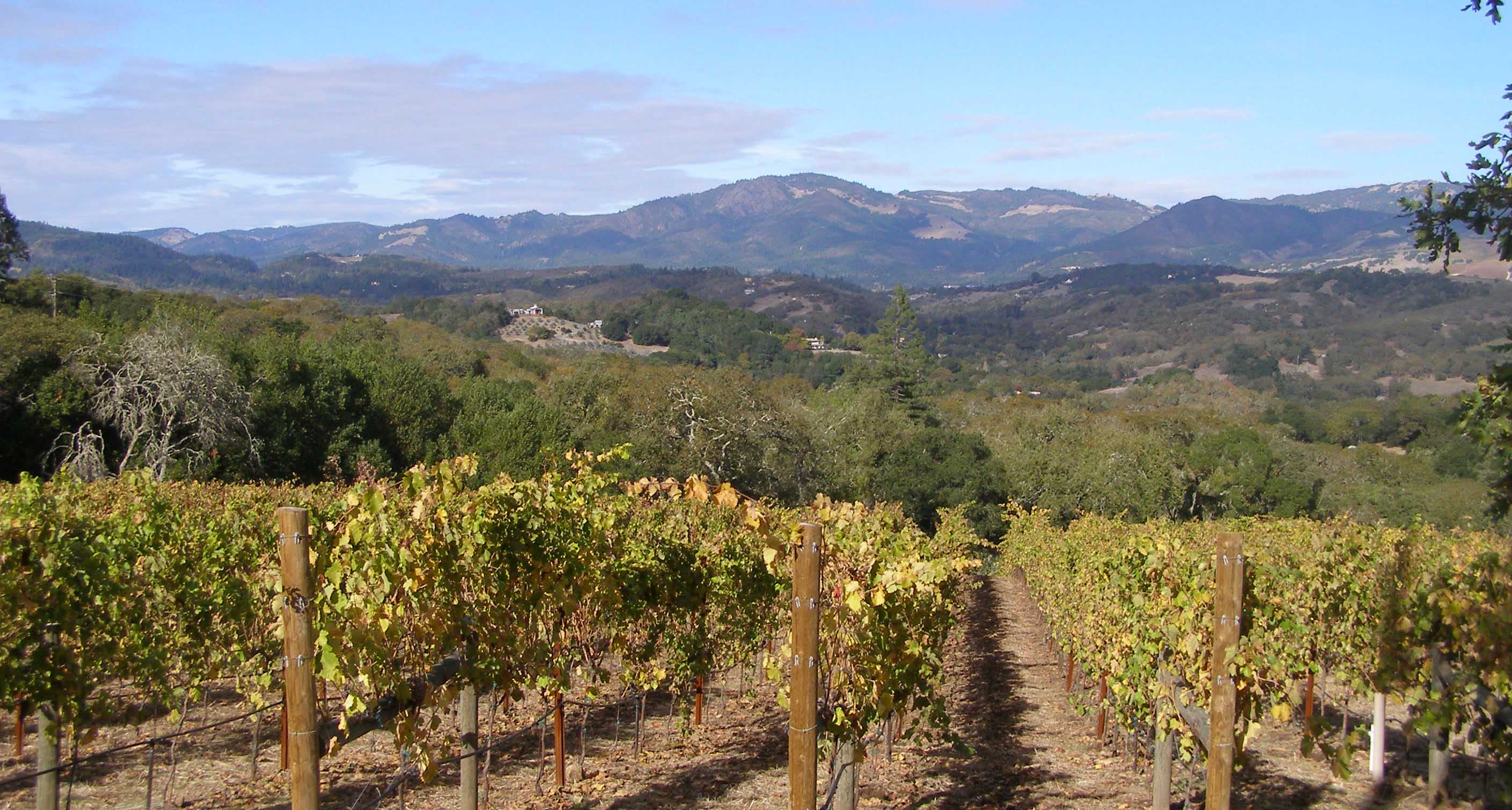 9 Things You Never Knew About California wine country photos