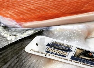 Each salmon harvested and processed by Gulkana Direct Seafoods is tagged with the company's identification. Photo courtesy of Bill Webber