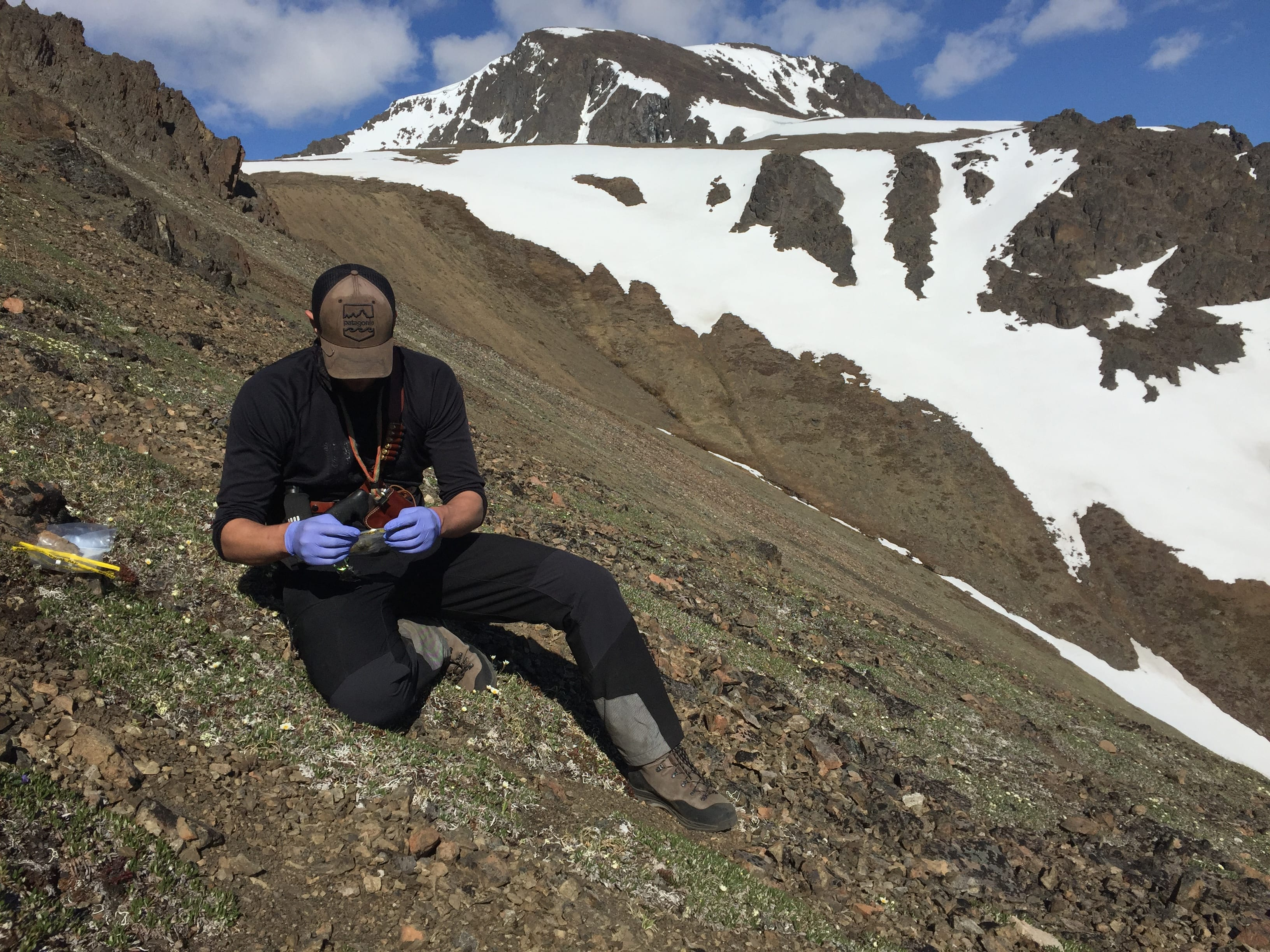 : Luke Metherell, a wildlife field technician and undergraduate student at UAA, spent most of his summer observing Dall sheep in the Chugach Mountains (Photo courtesy of Luke Metherell / Alaska Department of Fish and Game).
