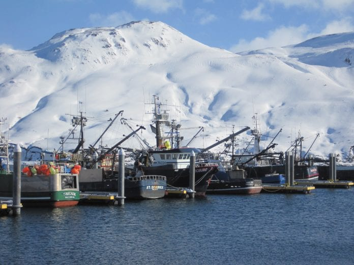 As the busiest commercial and fishing port on the Bering Sea, Dutch Harbor can expect a significant increase in invasive species as the region's water warms (Image by M. Reimer).