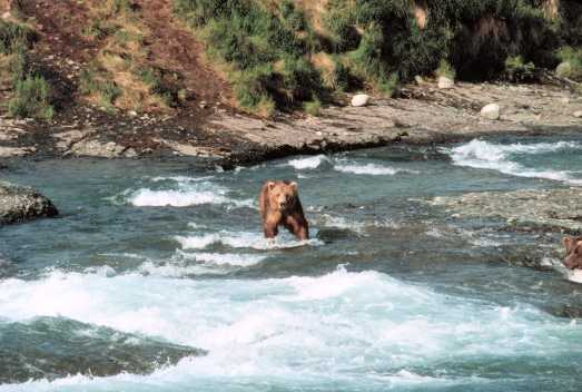 McNeil River State Game Sanctuary, Alaska
