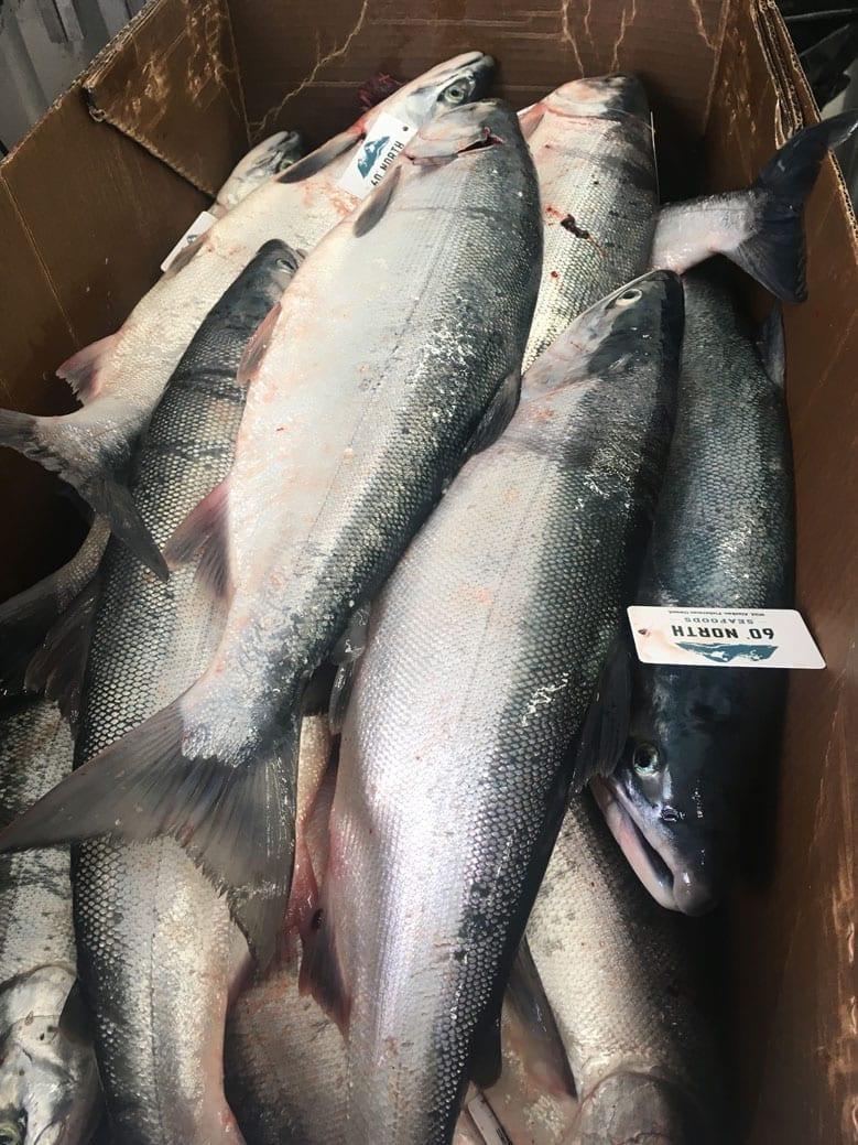 Copper River catch tops 790,000 salmon -The Cordova Times