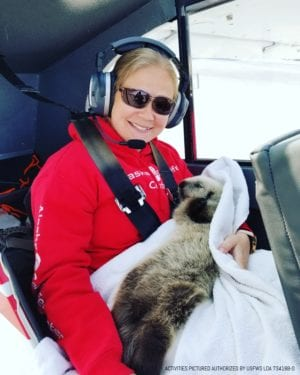 Veterinary technician Sarah McMillen cuddles a five-pound female sea otter pup estimated to be three weeks old in a flight donated by pilot Duke Marolf, after the pup was found stranded against rocks by a strong current. Photo courtesy Alaska SeaLife Center.
