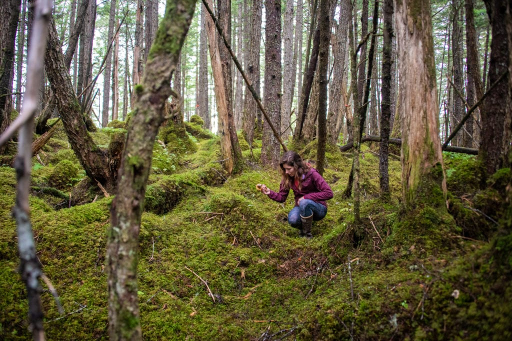 Sarah Kathrein searches for mushrooms near the Haystack Trail. (Aug. 31, 2019) Photo by Zachary Snowdon Smith/The Cordova Times
