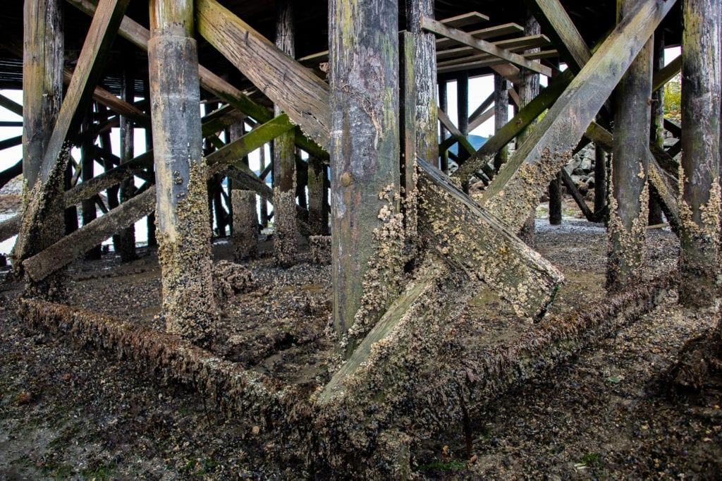 The unsteadiness of Prince William Sound Science Center's dock pilings interferes with some laboratory measurements. (Sept. 4, 2019) Photo by Zachary Snowdon Smith/The Cordova Times