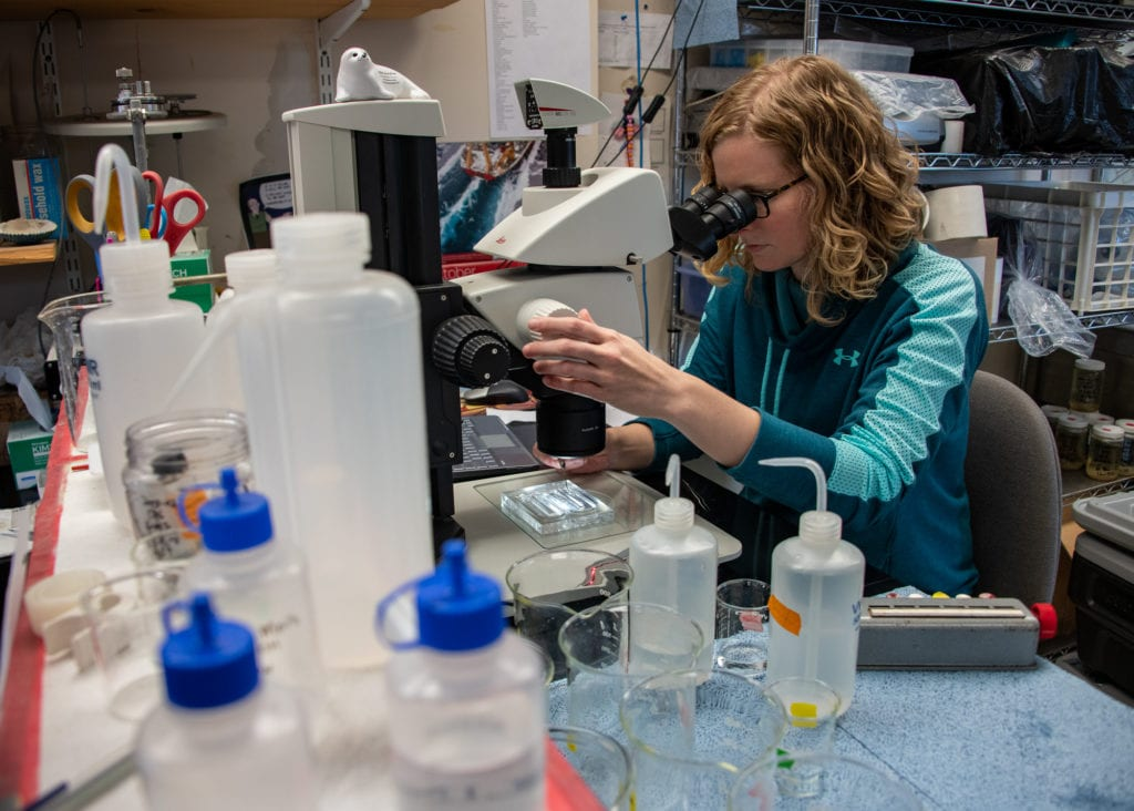 Research assistant Caitlin McKinstry counts zooplankton under a microscope. (Oct. 14, 2019) Photo by Zachary Snowdon Smith/The Cordova Times