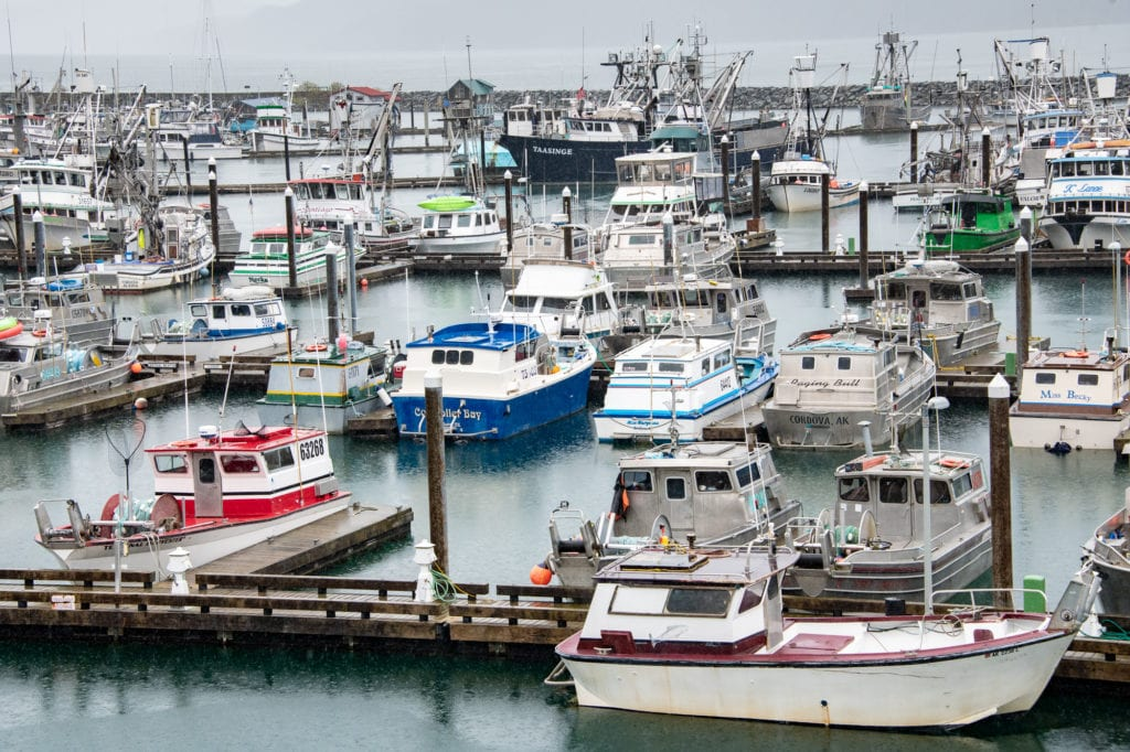 Fishing vessels docked in Cordova Harbor. (Sept. 12, 2019) Photo by Zachary Snowdon Smith/The Cordova Times