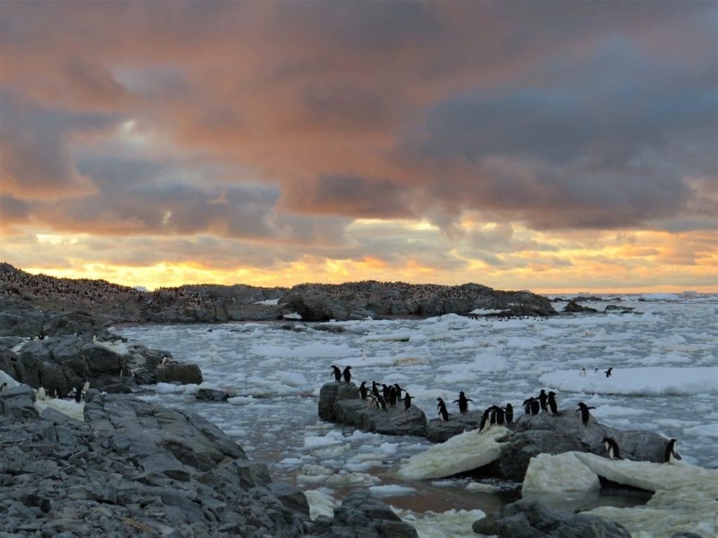 Adélie Penguins at sunset on Avian Island. Photo courtesy Anne Schaefer/for The Cordova Times